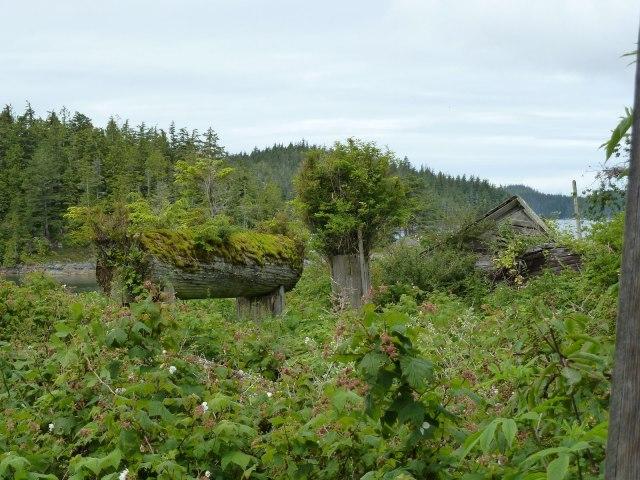 overgrown longhouse beams