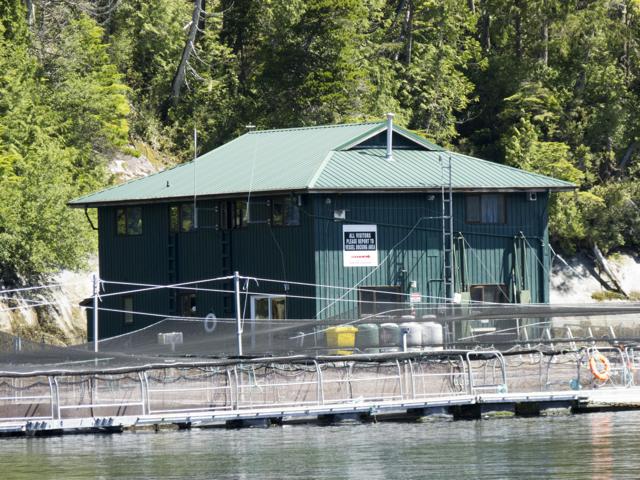 Fish Farm, Tribune Channel