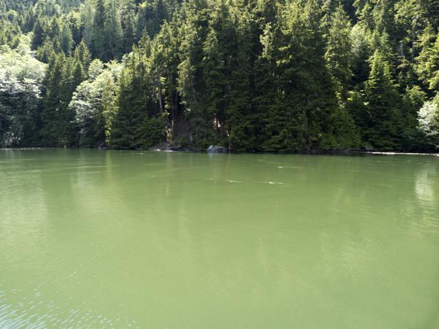 Algae in Sargeaunt Passage