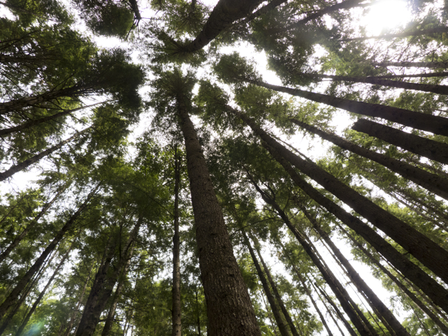 Tall trees Mound Island