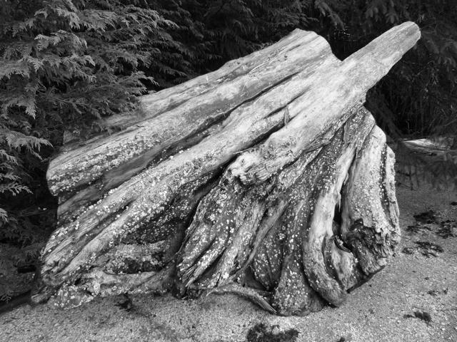 big trunk Fury Cove