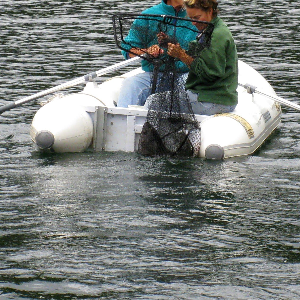 carrying halibut ashore