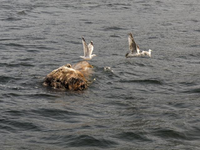 gulls fly away
