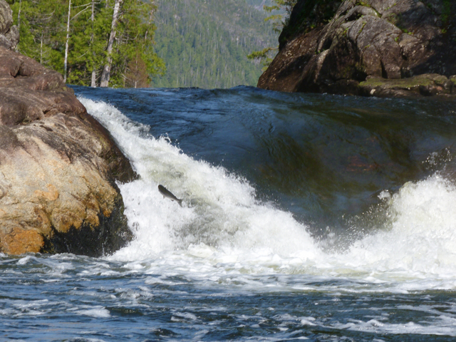 salmon falls Lowe Inlet