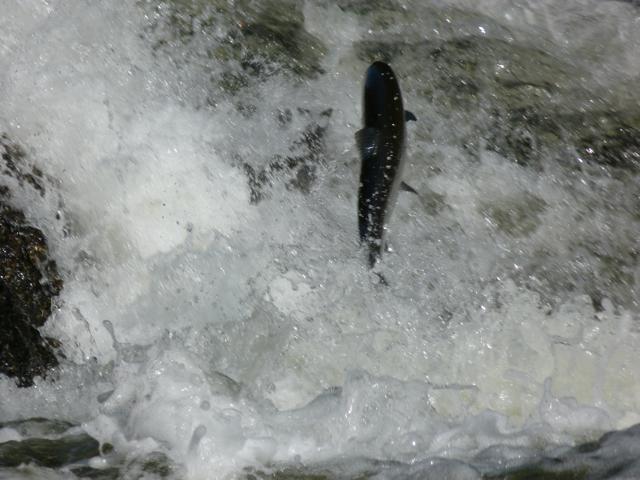 salmon Verney Falls