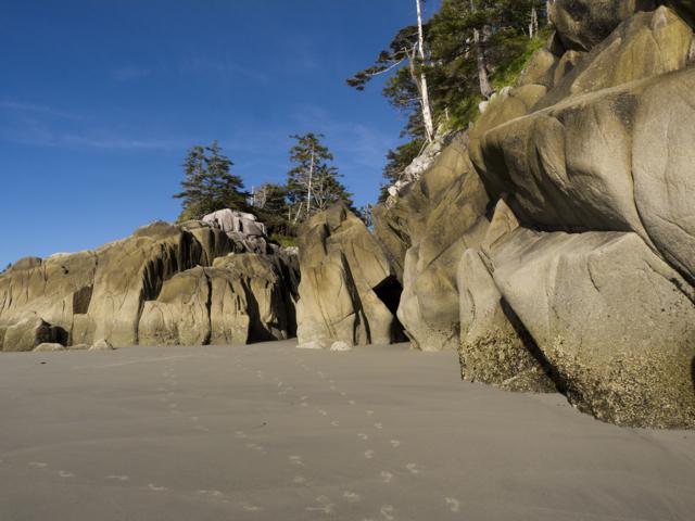 Hakai Beach outcrop